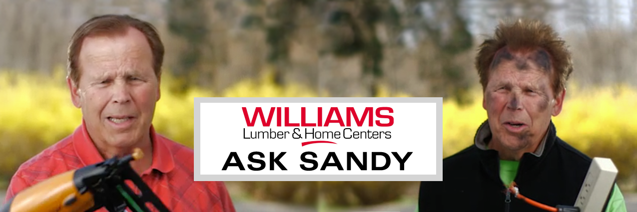 Ask Sandy Page Header Image